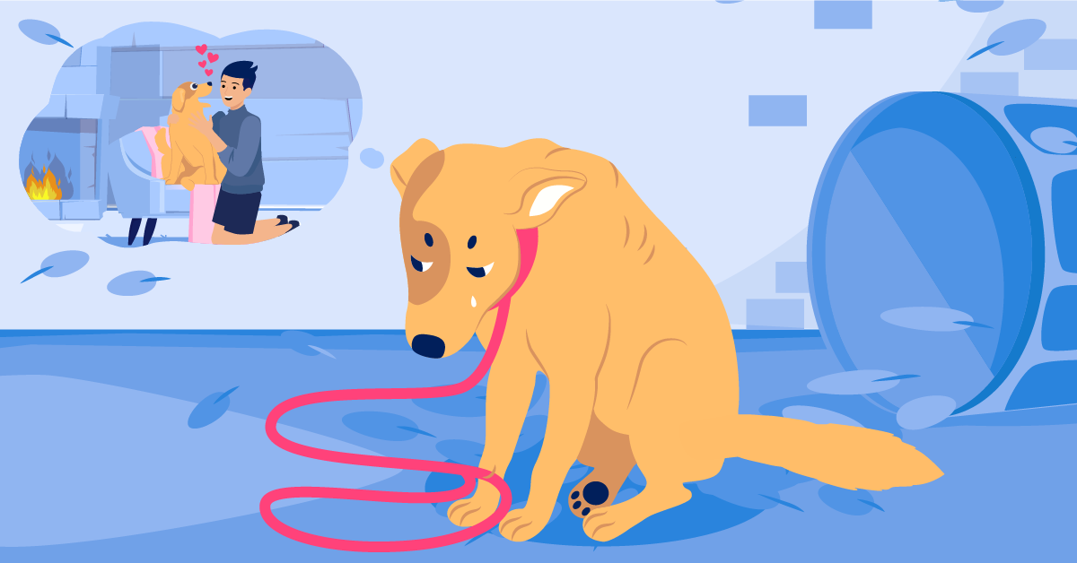Benefits of Microchipping Your Pet
