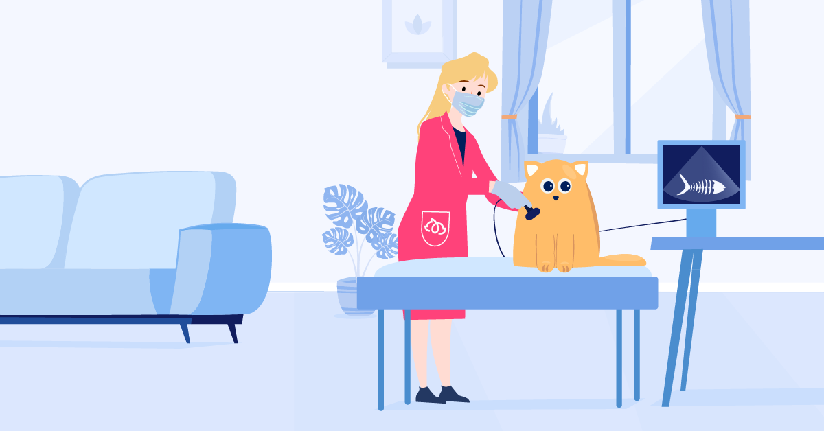 Ultrasound for Your Pet in the Comfort of Your Own Home!