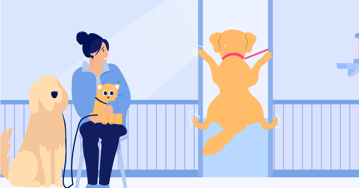 3 Ways Your Pet Benefits From Veterinary Care at Home